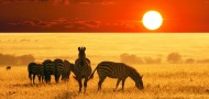 African Safari & Tour with Brand g